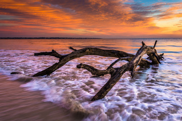 Tree and waves in the Atlantic Ocean at sunrise at Driftwood Bea Wall mural