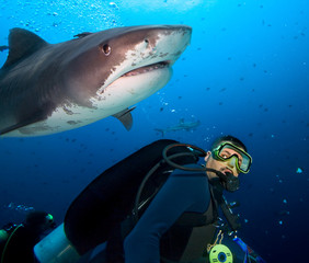 Stunned Diver and Tiger Shark