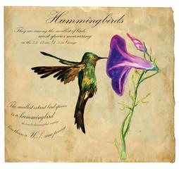 Hand painted illustration (vector), Bird: Hummingbird