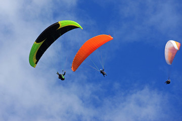 Wall Mural - paragliders