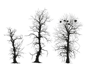 trees silhouettes. Vector. Isolated on white.