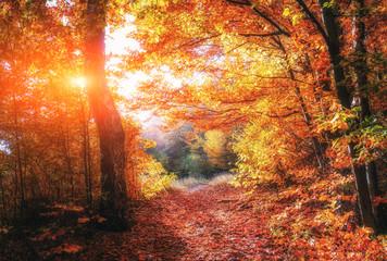 Wall Murals Bestsellers Autumn Landscape.