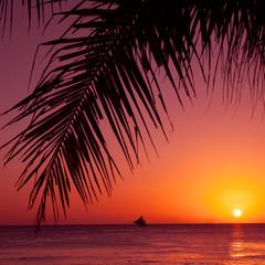 Tropical sunset. Sea, palm and sun.