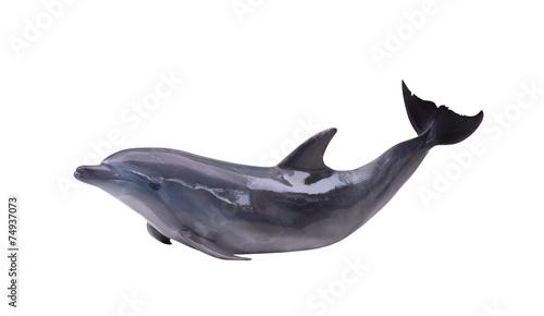 dark gray isolated dolphin