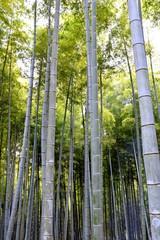 京都 伏見の竹