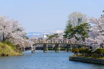 Cherry blossoms at the Takada Park in Joetsu city, Niigata, Japa