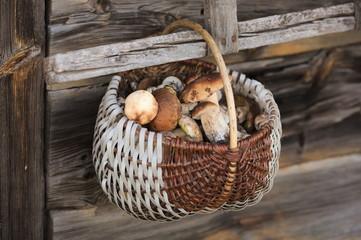 Grzybobranie grzyby borowiki