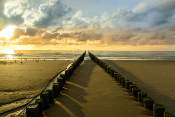 Canvas Print - Breakwaters on the beach at sunset in Domburg Holland