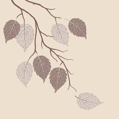 Autumn leaves on a tree