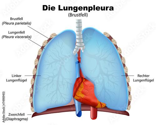 lungenpleura, pleura der lunge vektor illustration\