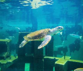 sea turtle in underwater world