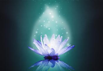 blue water lotus on magic light