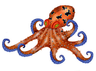 octopus white background