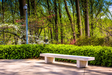 Bench and spring color at the Washington DC Mormon Temple in Ken