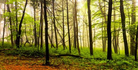 Fog in the forest, Shenandoah National Park, Virginia.