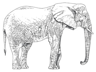 Hand drawn elephant.