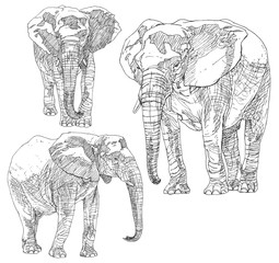 Set of hand drawn elephants.