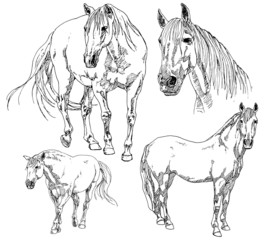 Set of hand drawn horses.