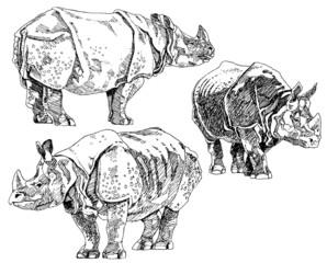 Set of hand drawn rhinoceros