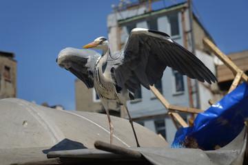 Heron at the Turkey bazaar