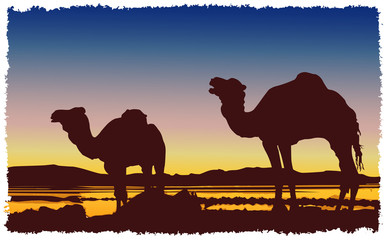 Сaravan camels desert