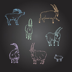 Hand drawn sketch of goats. Vector illustration.
