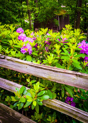 Flowering bush and a fence.