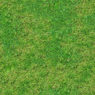 Green Fresh Meadow Grassland.