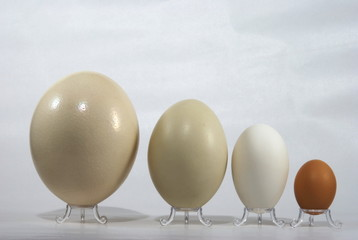 Various eggs