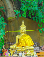 Meditation Buddha statue. Under the Bodhi tree