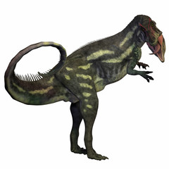 Allosaurus over White