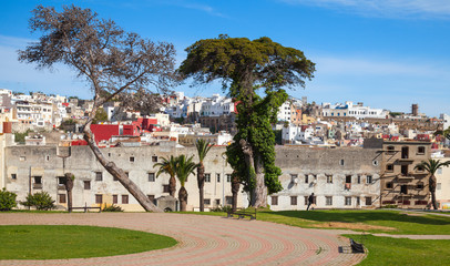 Tangier, Morocco. Street view with old trees