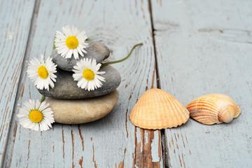 Acrylic Prints Daisies Drie zenstenen met madeliefjes en schelpen op oud hout