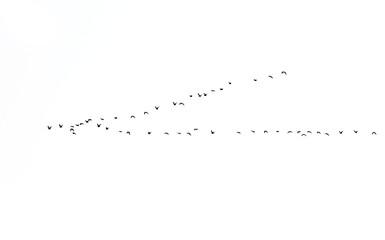 bird on white background