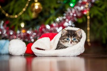 Little tabby kitten sitting in a christmas hat