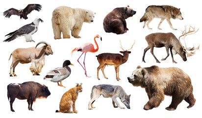 bear and other european animals. Isolated on white