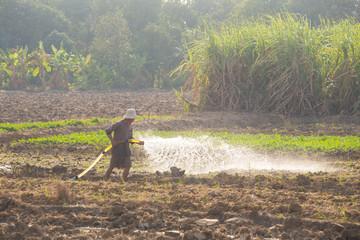 Farmer watering vegetable in suphanburi