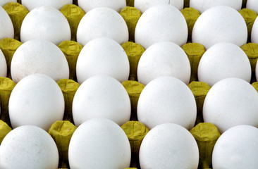white eggs in packing