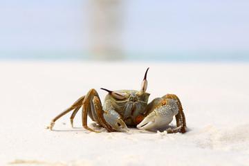Skeptical Crab.