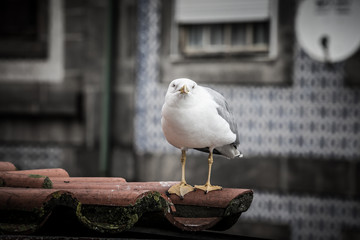 sea gull on a tiled roof