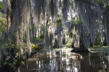 Bayou Swamp Scene with Spanish Moss