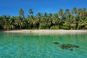 Untouched tropical shore of an island in Panama