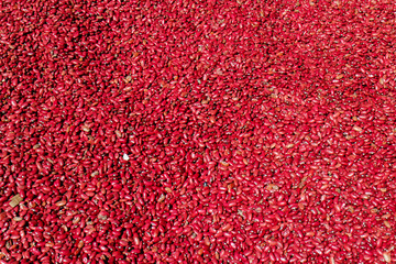Red beans pattern as background