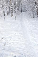 Winter landscape path