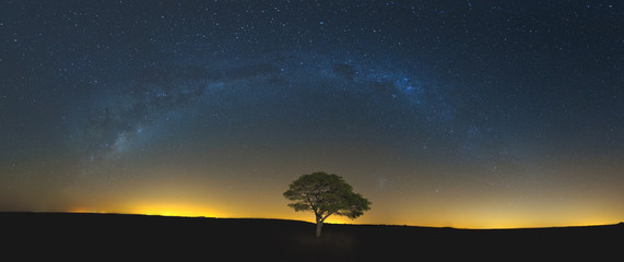 Keuken foto achterwand Nacht Star scape with lone tree brown grass and Milky Way and soft lig