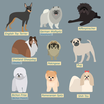 Simple silhouettes of dogs. Types of mini-dogs in flat design