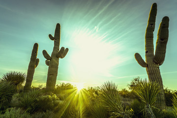 Desert sunrise in Scottsdale,Arizona