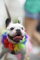 Dog in Bright Colors Rio Animal Carnival