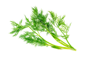 Tasty dill herb garnish isolated on white