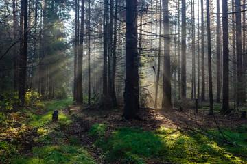 Morning sunlight in wood